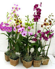 orchid centerpieces leaf learn orchid wedding centerpieces orchid plants
