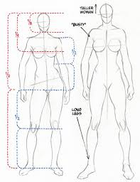 Male And Female Anatomy Proportions Proportions Of Male And Female Figures Are Similar