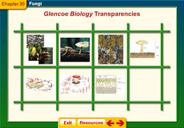 characteristics of the kingdom fungi ppt video online download