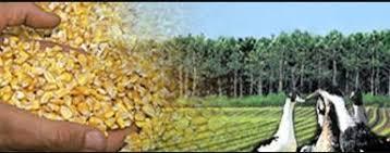 chambre agriculture landes chambre d agriculture des landes chambre de commerce d industrie