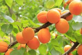 fruit tree workshop series treephillytreephilly