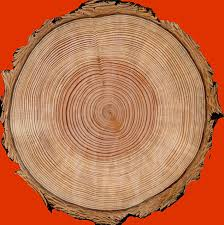 welcome to the science of tree rings