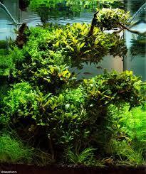 aquascape by nanostudioart adam golik progress in nature