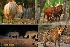 safari chiang mai night safari chiang mai attractions and national parks