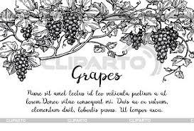 grapevine stock photos and vektor eps clipart cliparto