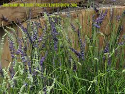 Shot The Lavender Garden U2013 Invironment U2013 Medium