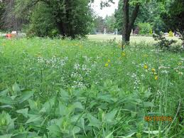 examples of native plants informal natural plants for your landscape design in wayne county