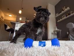 gobone interactive dog toy gadget flow