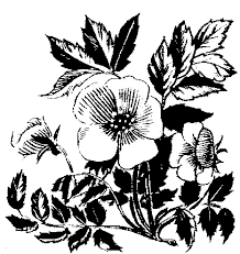 Wedding Flowers Drawing Wedding Flowers Black And White Wedding Flower Clipart