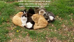 thanksgiving cats free thank you ecards greeting cards 123