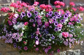 Porch Rail Flower Boxes by Flowers For Sunny Window Boxes