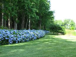 Landscaping Ideas For Backyard Privacy by Garden Landscape Fascinating Landscaping Shrubs For Partial Shade