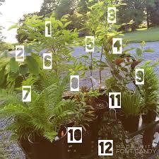 native plants for rain gardens mid atlantic native food forest polyculture for rain gardens u0026 wet
