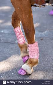 parade ribbon hoofs decorated with pink glitter and ribbon during the