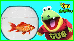 buying first pet fish from petsmart family fun trip animals toys