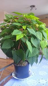 217 best house plants images on pinterest indoor gardening
