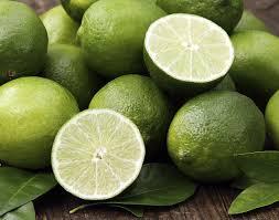 lime amazon com key lime tree fruit bearing size 8