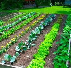 vegetable garden fence ideas 18 appealing vegetable garden ideas