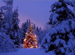 outdoor christmas tree december 2012 lisamarie desanto