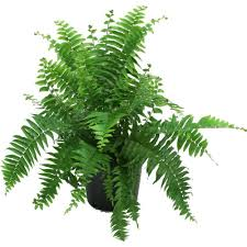 Indoor Plants by Medium Indoor Plants Garden Plants U0026 Flowers The Home Depot