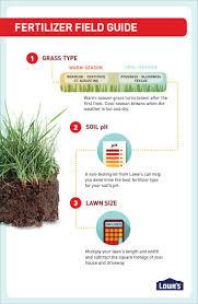 best 25 lawn grass types ideas on pinterest types of lawn grass