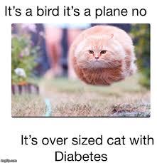 Diabetes Cat Meme - image tagged in diabetes imgflip