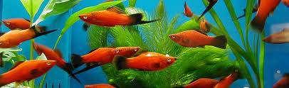 ornamental fish and invertebrates aquaculture business