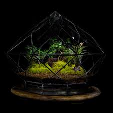 angles earth terrariums life in a glass diamond terrarium lr