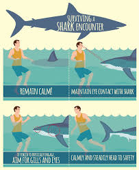 how to avoid a shark attack u2013 and what to do if it happens