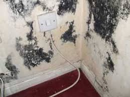 What Causes Mould In Bathrooms What Causes Damp And Mould On Walls And How To Fix It Diy Doctor