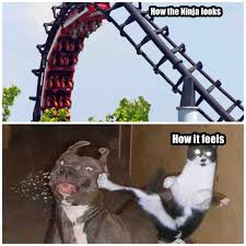 Roller Coaster Meme - create a coaster meme page 4 theme park review