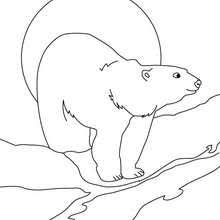 wild animal coloring pages 129 wild animals