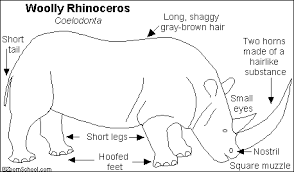 woolly rhinoceros printout enchantedlearning