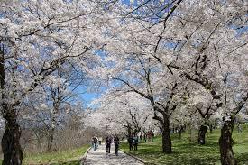 toronto parks high park