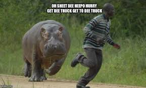 Hippo Memes - hippo chase memes imgflip