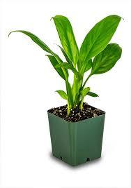 the 25 best terrarium plants for sale ideas on pinterest