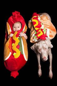 Hotdog Halloween Costume Dog Costume Pictures Images Stock Photos Istock