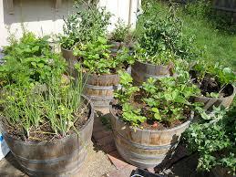 barrel garden ideas 28 images barrel planter garden ideas