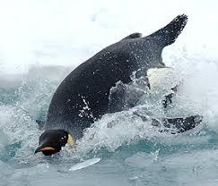emperor penguin facts for kids penguins information