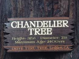 Chandelier Tree Address A Tree You Can Drive Through Literally