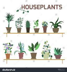 vector set indoor plants pots illustration stock vector 224907763
