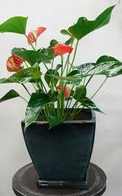 house plants payless hardware rockery u nursery pretty indoor