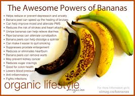 everything you should know about bananas