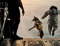 belgian shepherd special forces dogs of the special forces sometimes interesting