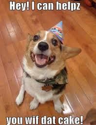 Cute Dog Memes - 25 funny animal memes to make you laugh till you drop