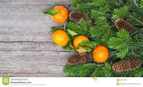mandarine fruits and christmas tree branches stock photo image