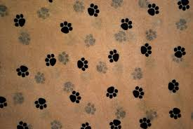 paw print tissue paper small paw print on kraft tissue paper 335 gift wrap