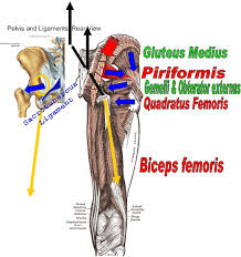 Bicep Innervation Muscle Energy Techniques