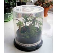 Windowsill Greenhouse Easy Diy Mini Greenhouse Ideas Creative Homemade Greenhouses