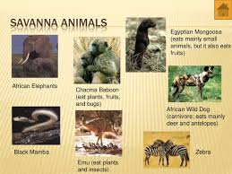 Tropical Savanna Dominant Plants - photo collection savanna animals and plants
